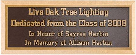 Live Oak Tree Lighting, 2008